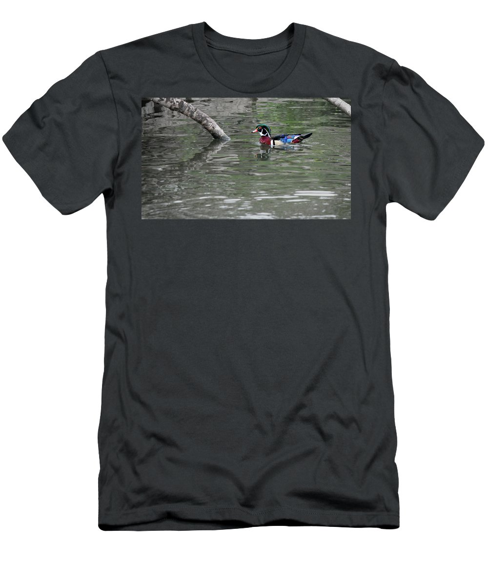 Male Wood Duck Men's T-Shirt (Athletic Fit) featuring the photograph Drake Wood Duck On Pond by Codee Pyke