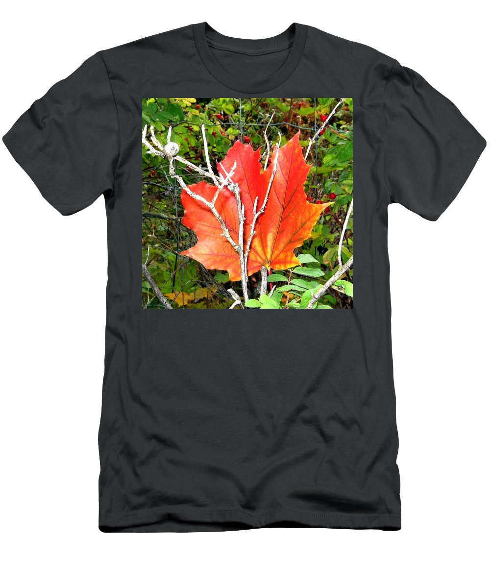 Autumn Men's T-Shirt (Athletic Fit) featuring the photograph Maple Mania 6 by Will Borden