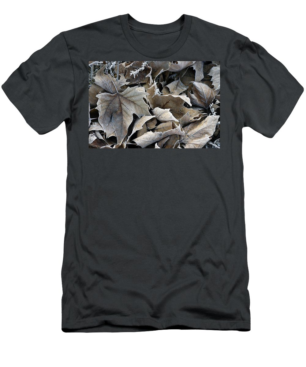 Maple Men's T-Shirt (Athletic Fit) featuring the photograph Maple Salad by D'Arcy Evans