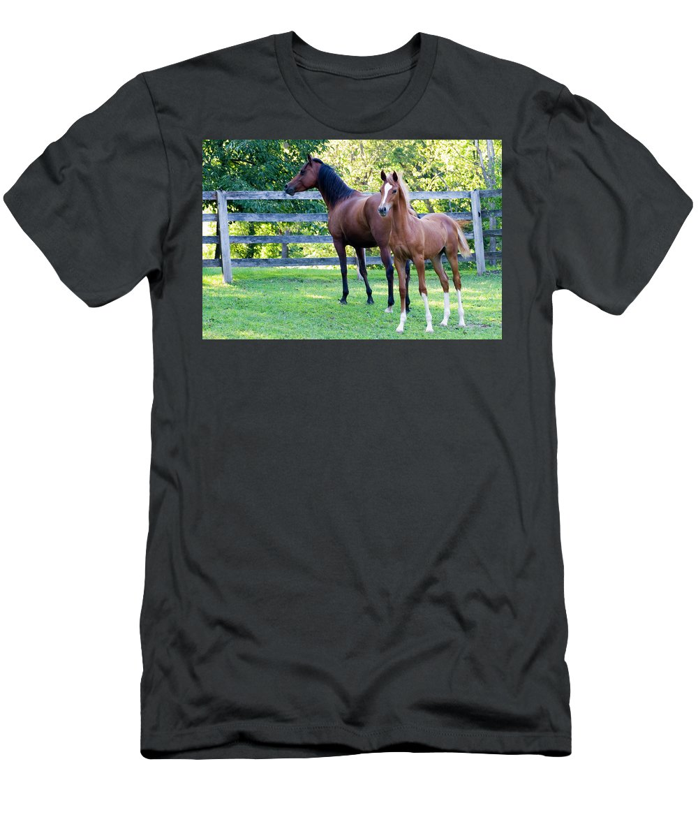 Horse Men's T-Shirt (Athletic Fit) featuring the photograph Mare And Colt by Michael Barry