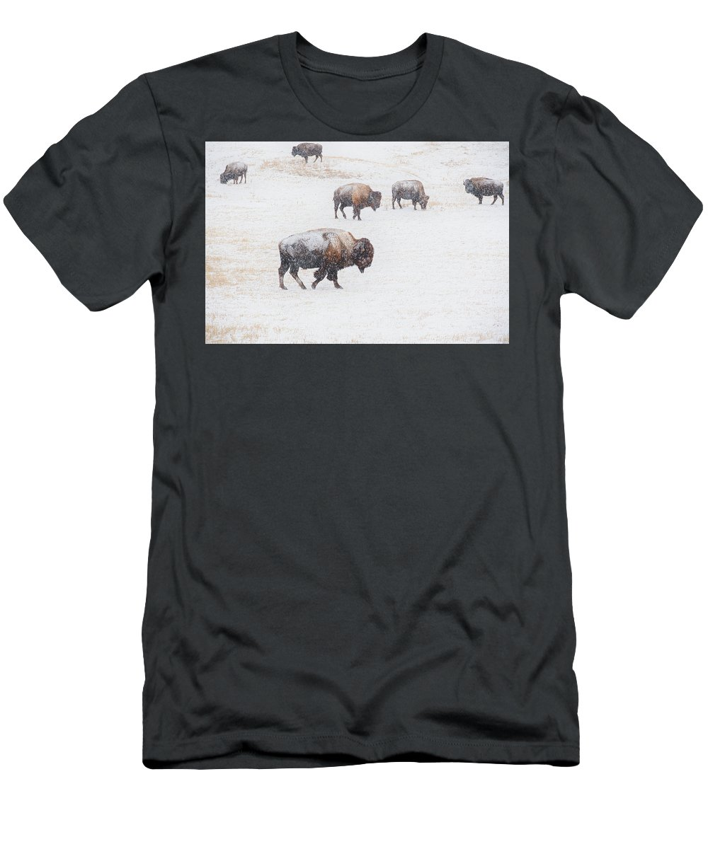 Buffalo Men's T-Shirt (Athletic Fit) featuring the photograph Matriarch by Derald Gross