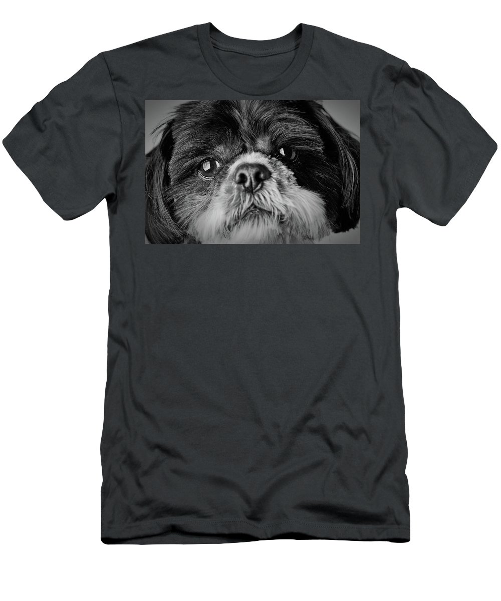 Shih Tzu Dog Men's T-Shirt (Athletic Fit) featuring the photograph Max - A Shih Tzu Portrait by Onyonet Photo Studios