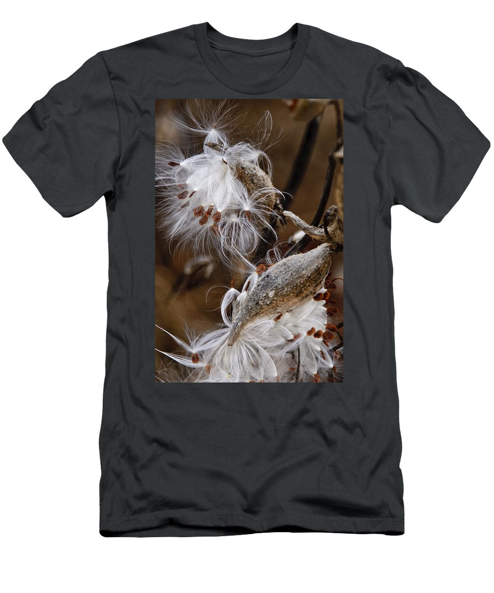 Milkweed Men's T-Shirt (Athletic Fit) featuring the photograph Milkweed Silk by Michael Cummings