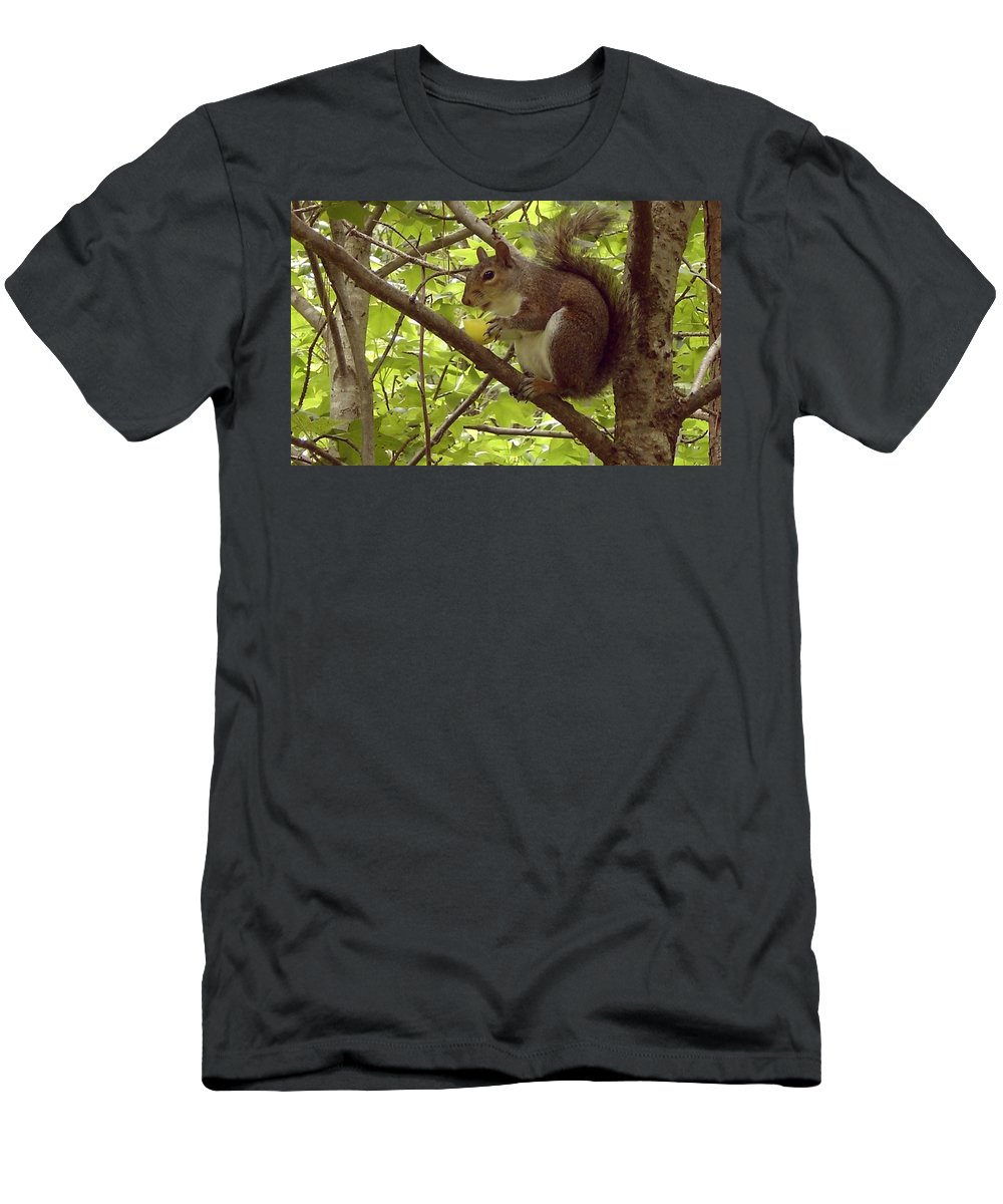 Squirrel Men's T-Shirt (Athletic Fit) featuring the photograph Mmmmm Good by Mary Rogers