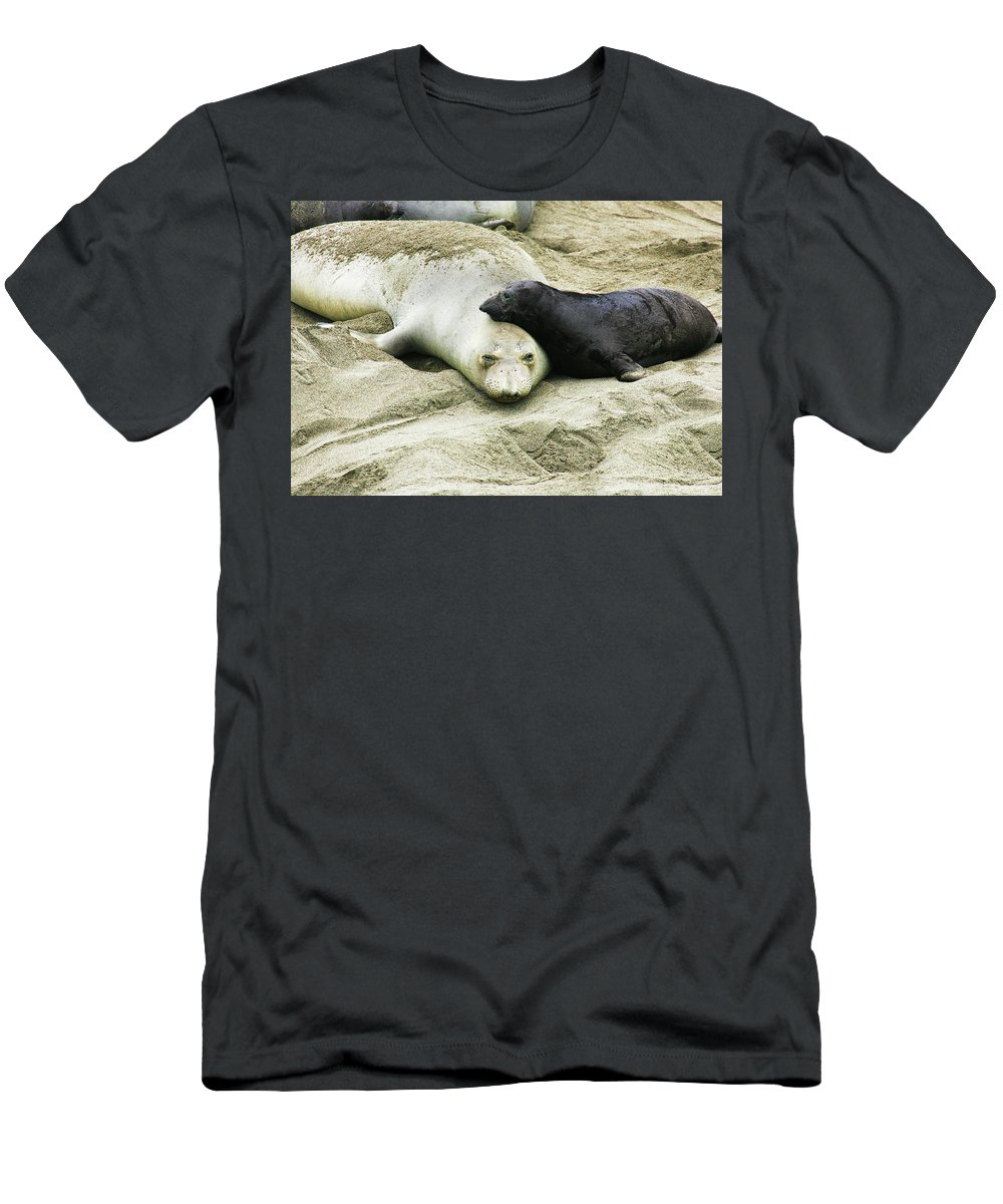 Elephant Seal T-Shirt featuring the photograph Mom and Pup by Anthony Jones