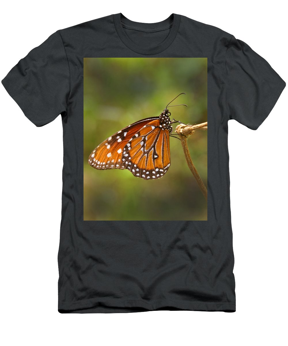 Monarch Men's T-Shirt (Athletic Fit) featuring the photograph Monarch Butterfly by Heather Coen