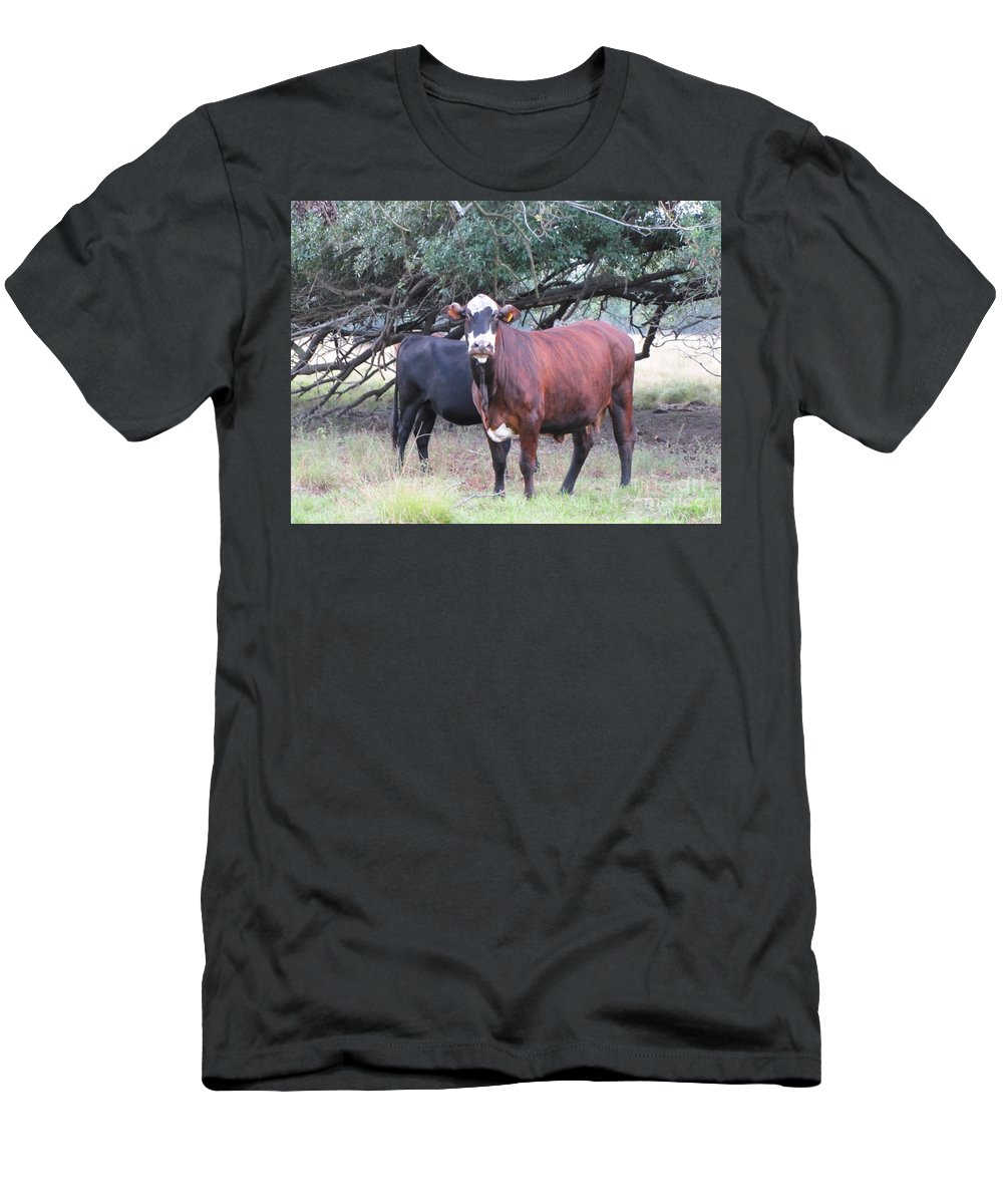 Cows Men's T-Shirt (Athletic Fit) featuring the photograph Moo Cow by Michelle Powell