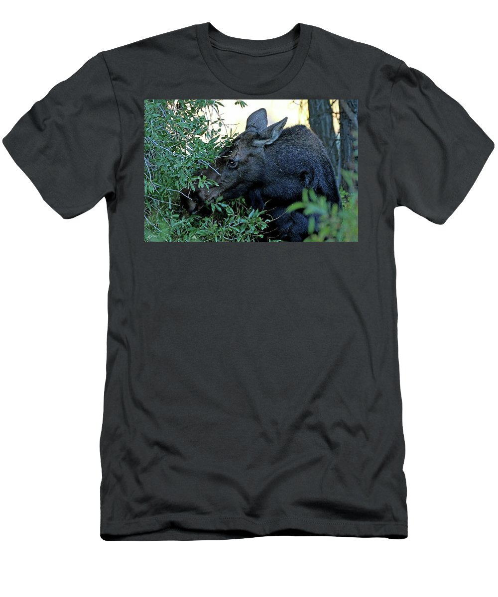 Wildlife Men's T-Shirt (Athletic Fit) featuring the photograph Moose In Wyoming # 3 by G Berry