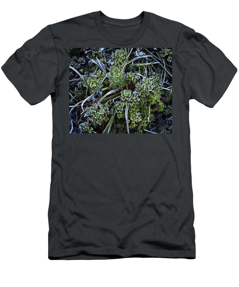 Ground Cover Men's T-Shirt (Athletic Fit) featuring the photograph Morning Frost by John Christopher