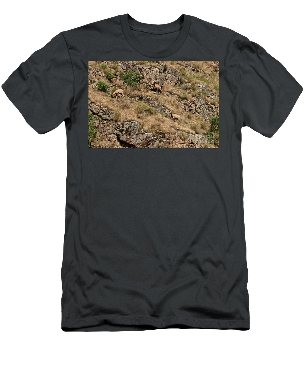 Sheep Men's T-Shirt (Athletic Fit) featuring the photograph Mountain Sheep Hell Canyon by Robert Bales