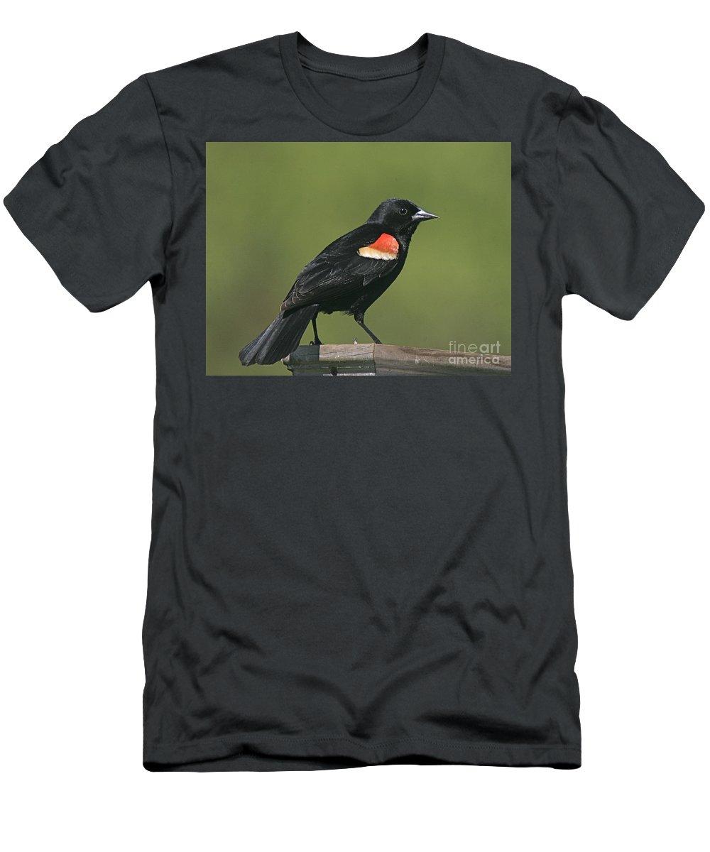 Bird Men's T-Shirt (Athletic Fit) featuring the photograph Mr Blck Bird by Robert Pearson