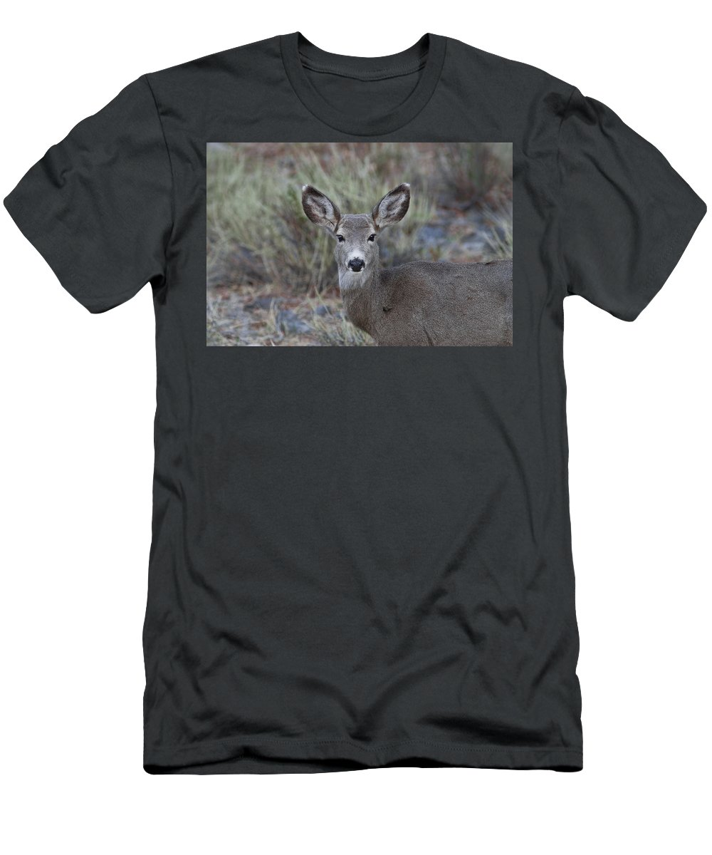 Mule Deer Men's T-Shirt (Athletic Fit) featuring the photograph Mulie by Rich Franco