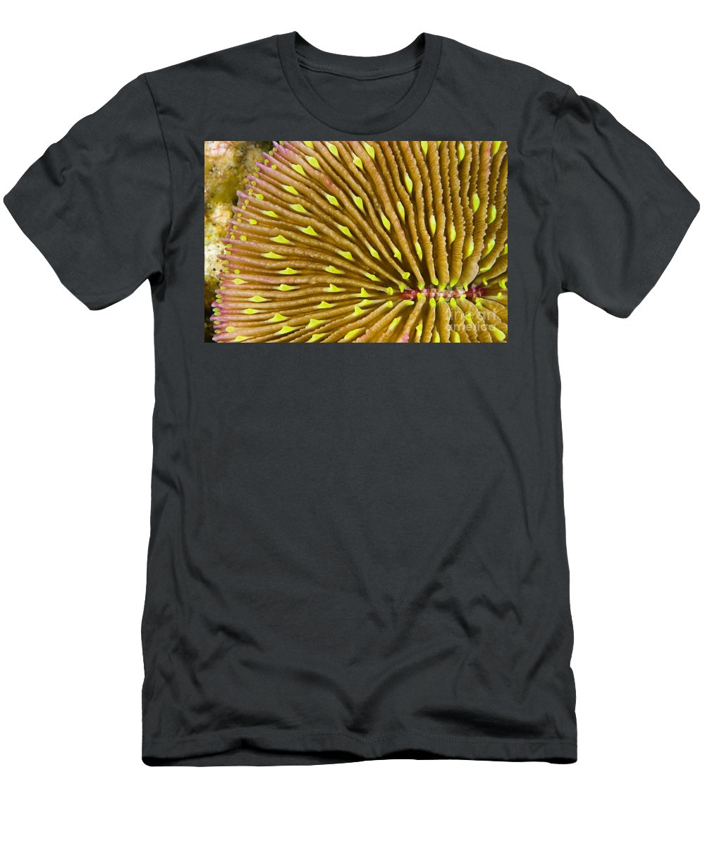 Above Men's T-Shirt (Athletic Fit) featuring the photograph Mushroom Coral by Dave Fleetham - Printscapes