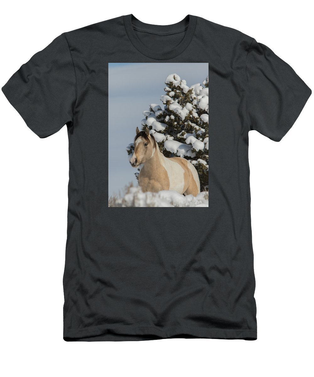 Wild Horse Men's T-Shirt (Athletic Fit) featuring the photograph Mustang Winter by Kent Keller