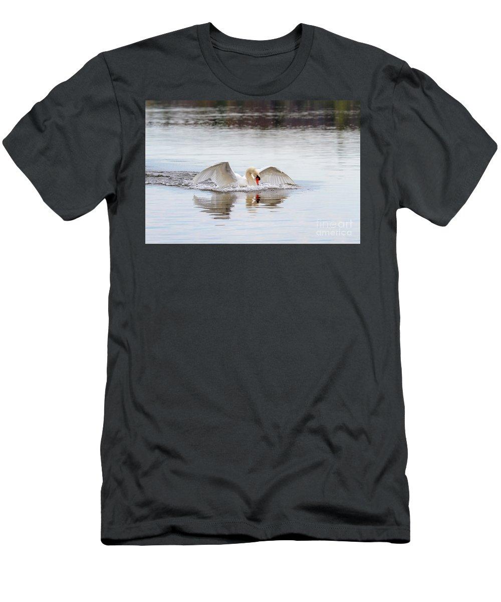 Mute Swan Men's T-Shirt (Athletic Fit) featuring the photograph Mute Swan Swim by Karen Jorstad