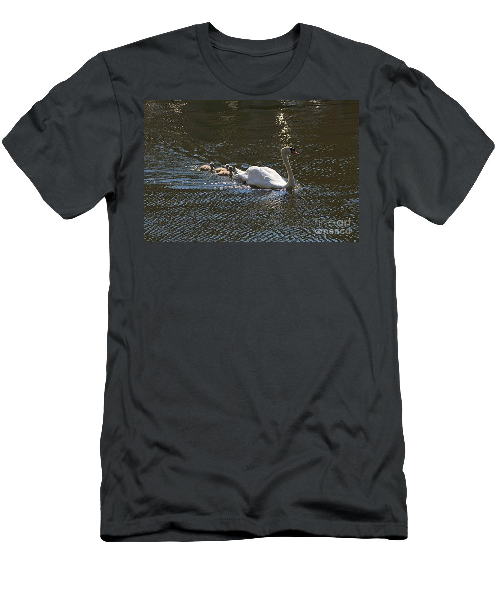 Swans Men's T-Shirt (Athletic Fit) featuring the photograph Mute Swan With Three Cygnets Following by Louise Heusinkveld