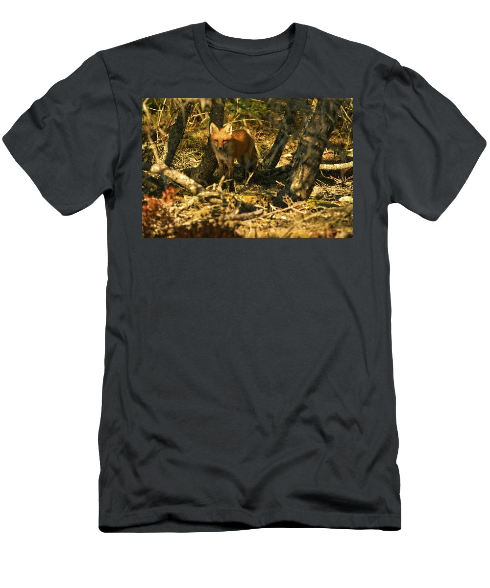 red Fox Men's T-Shirt (Athletic Fit) featuring the photograph My Friend Red by Paul Mangold