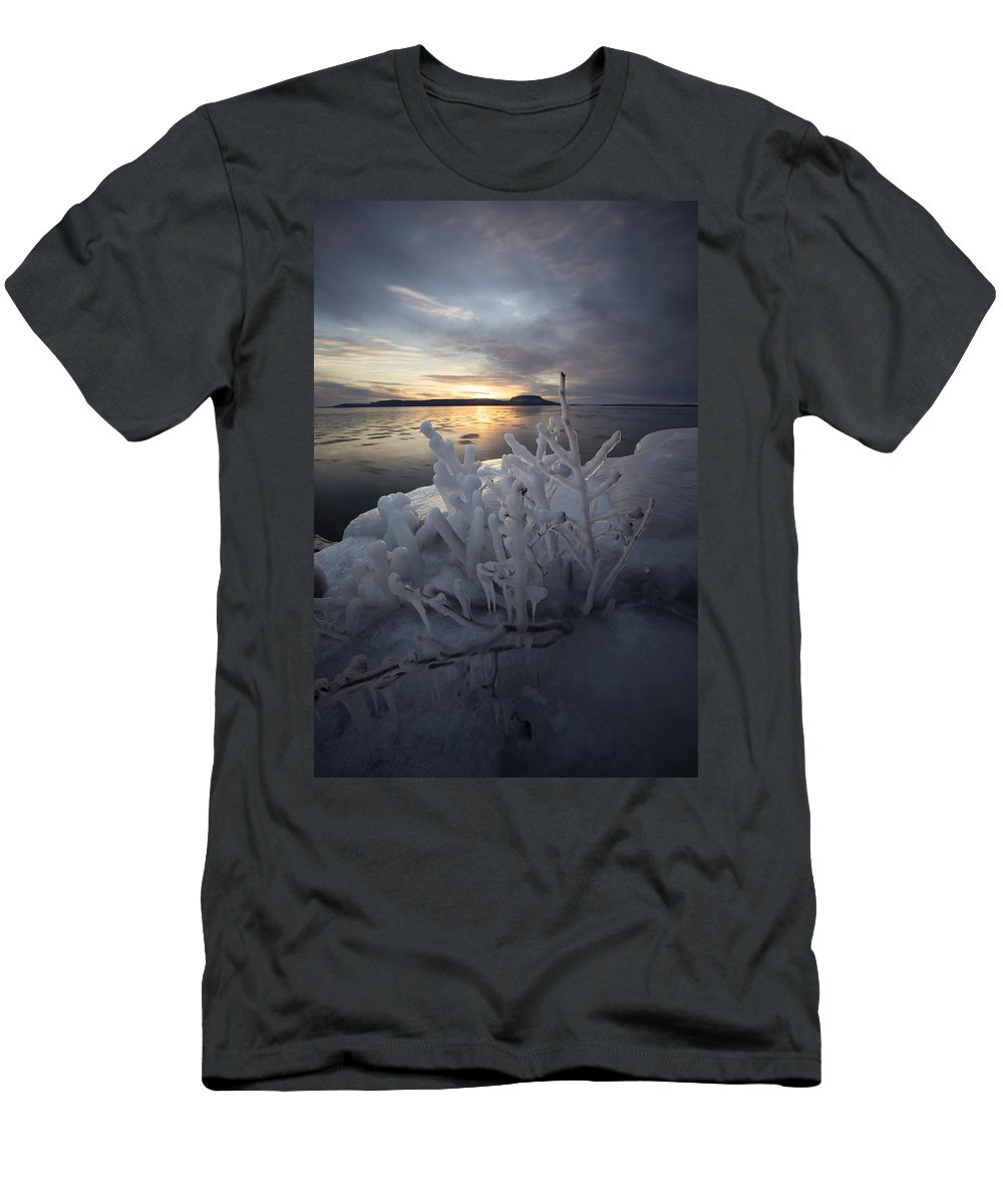 Aboriginal Men's T-Shirt (Athletic Fit) featuring the photograph New Year's Eve, Frozen Shrub by Jakub Sisak