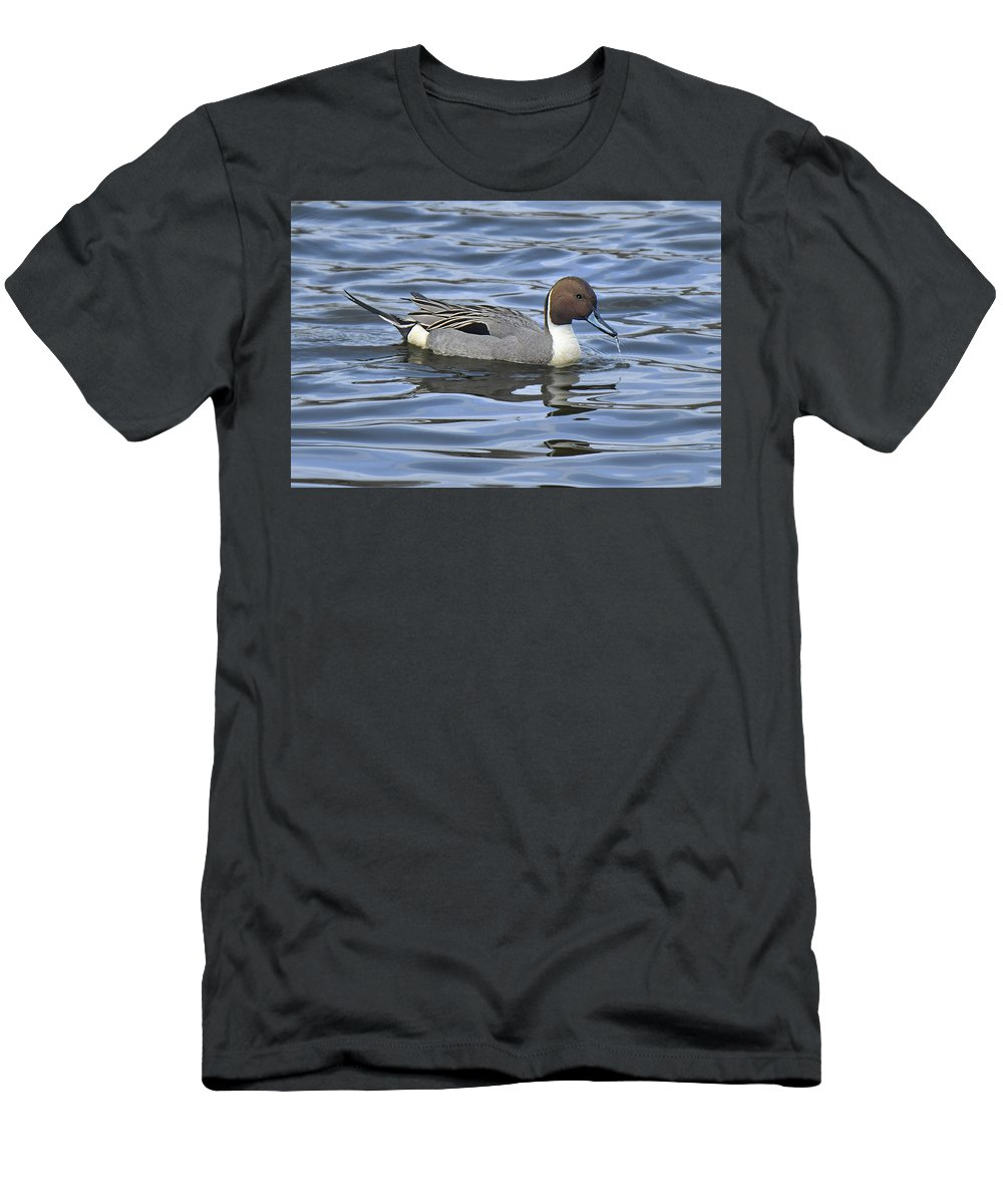 Duck Men's T-Shirt (Athletic Fit) featuring the photograph Northern Pintail by Alan Lenk