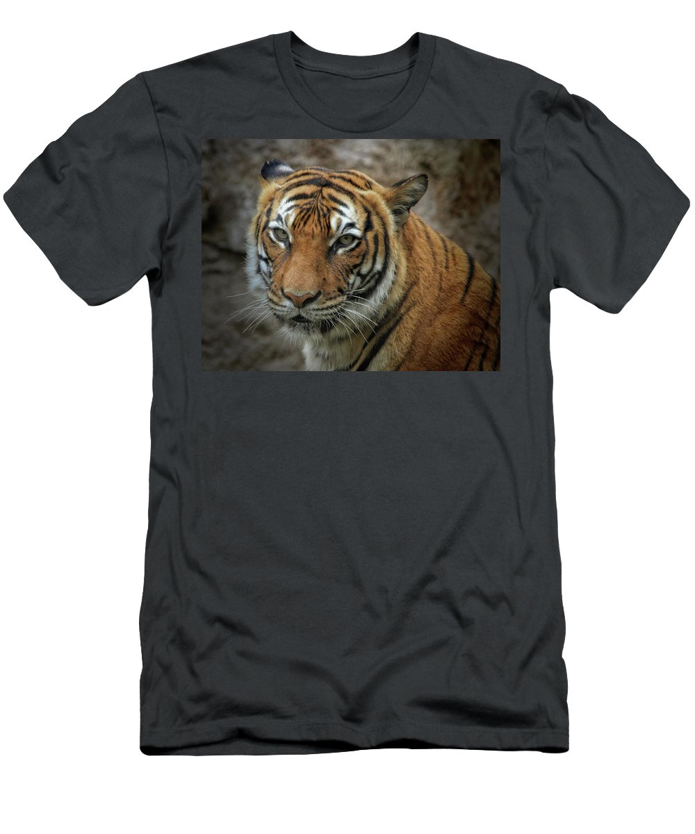 Cats Men's T-Shirt (Athletic Fit) featuring the photograph Not A Happy Sita by Elaine Malott