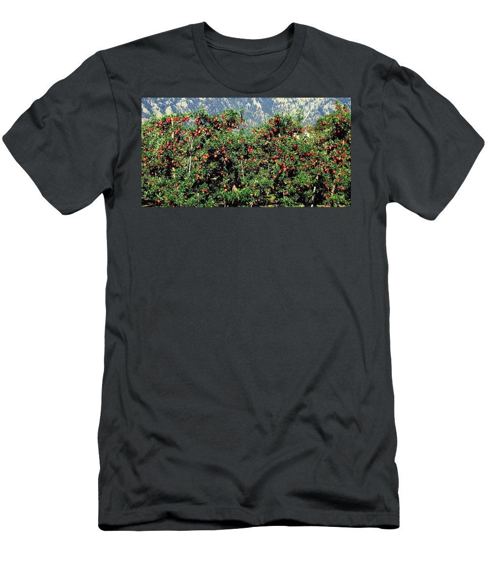 Apples Men's T-Shirt (Athletic Fit) featuring the photograph Okanagan Valley Apples by Will Borden