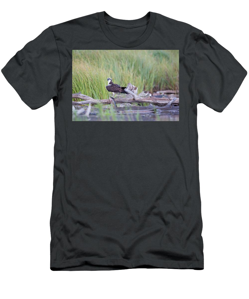 Avian Men's T-Shirt (Athletic Fit) featuring the photograph Osprey Victory by Robert L Moffat