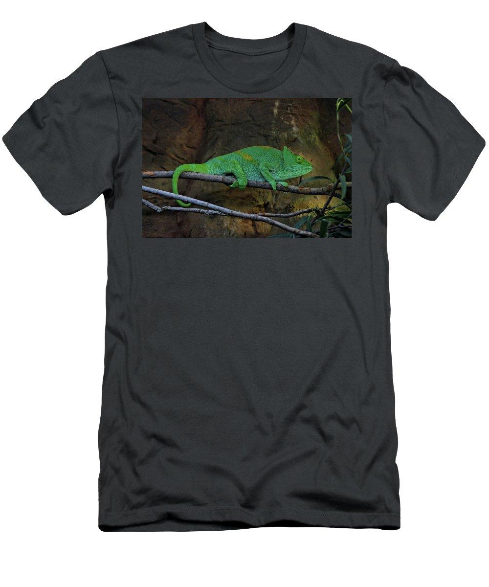 Chameleon Men's T-Shirt (Athletic Fit) featuring the photograph Parson's Chameleon by Doc Braham