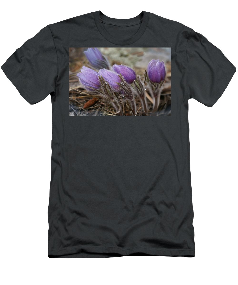 Pasque Flower Men's T-Shirt (Athletic Fit) featuring the photograph Pasque Flower Watercolor by Heather Coen