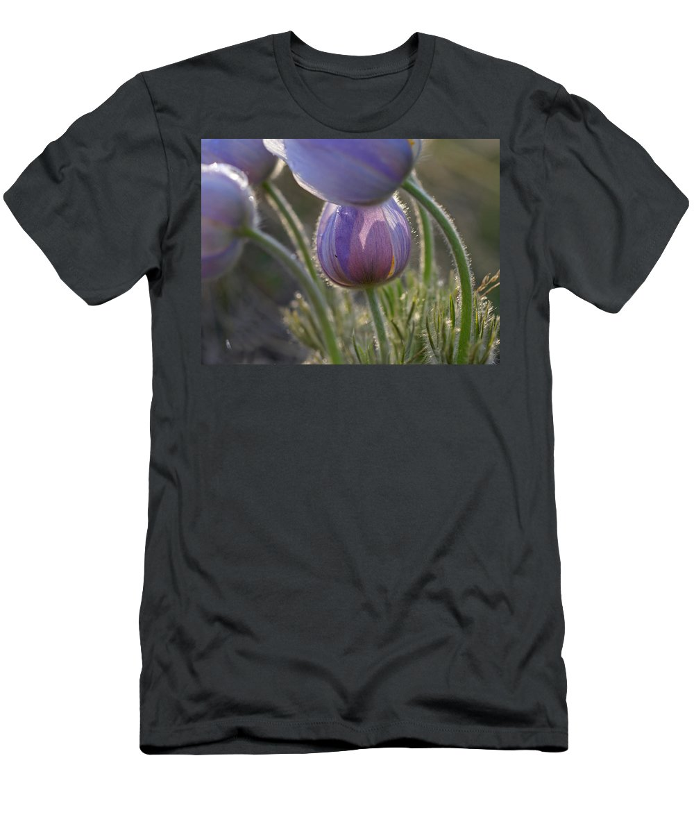 Pasque Men's T-Shirt (Athletic Fit) featuring the photograph Pasque Shadows by Heather Coen