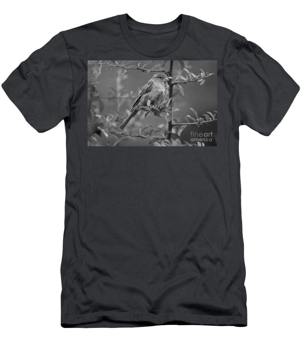 Bird Men's T-Shirt (Athletic Fit) featuring the photograph Pensive Rest by Photos By Zulma