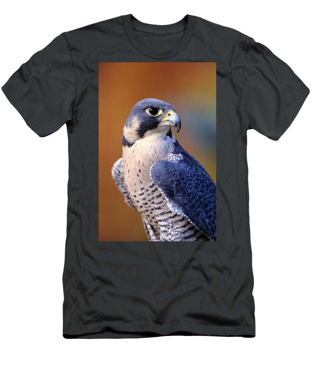 Animal Art Men's T-Shirt (Athletic Fit) featuring the photograph Peregrine Falcon by John Hyde - Printscapes