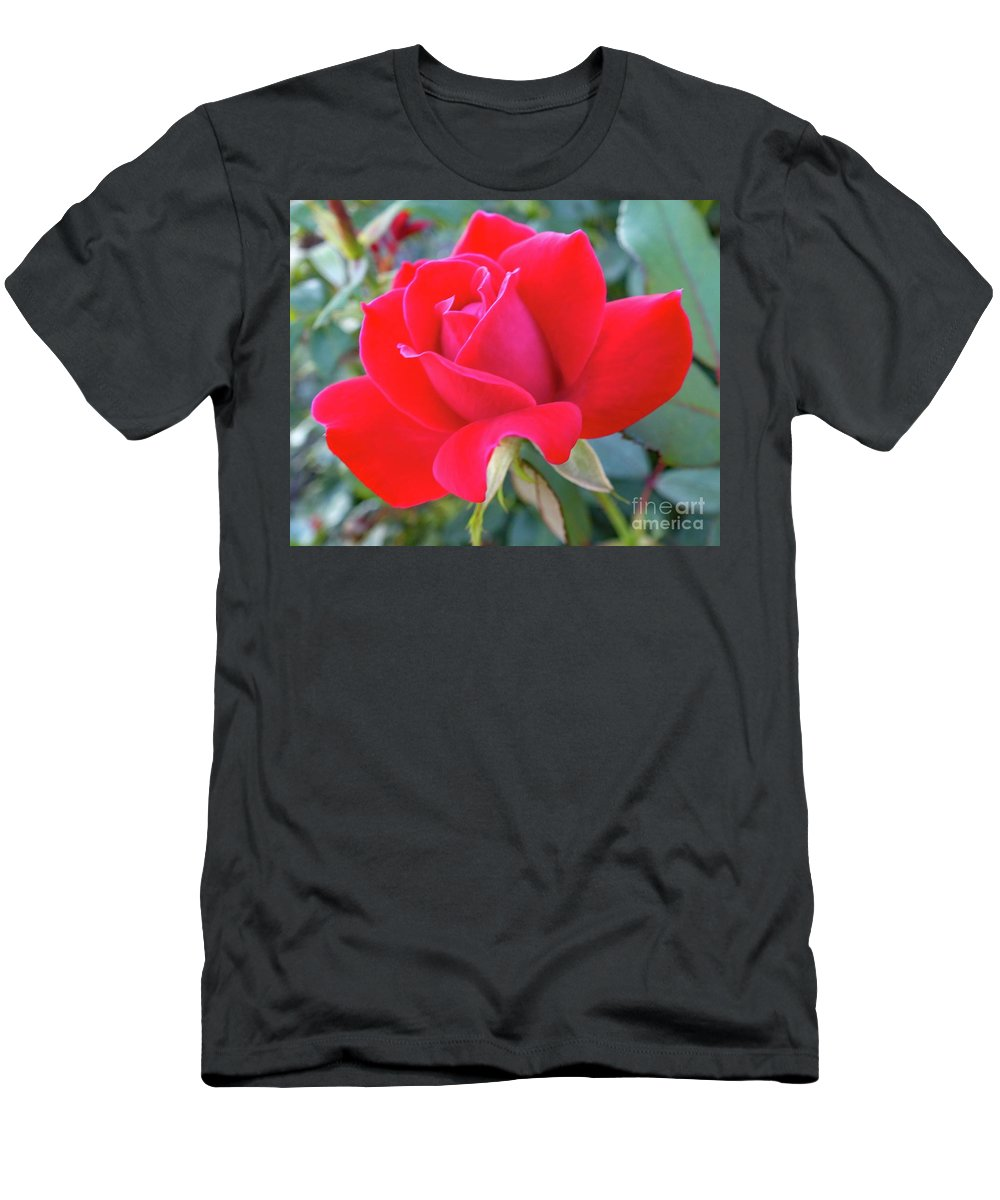 Rosa Men's T-Shirt (Athletic Fit) featuring the photograph Perfect Form - Knock Out Rose by Cindy Treger