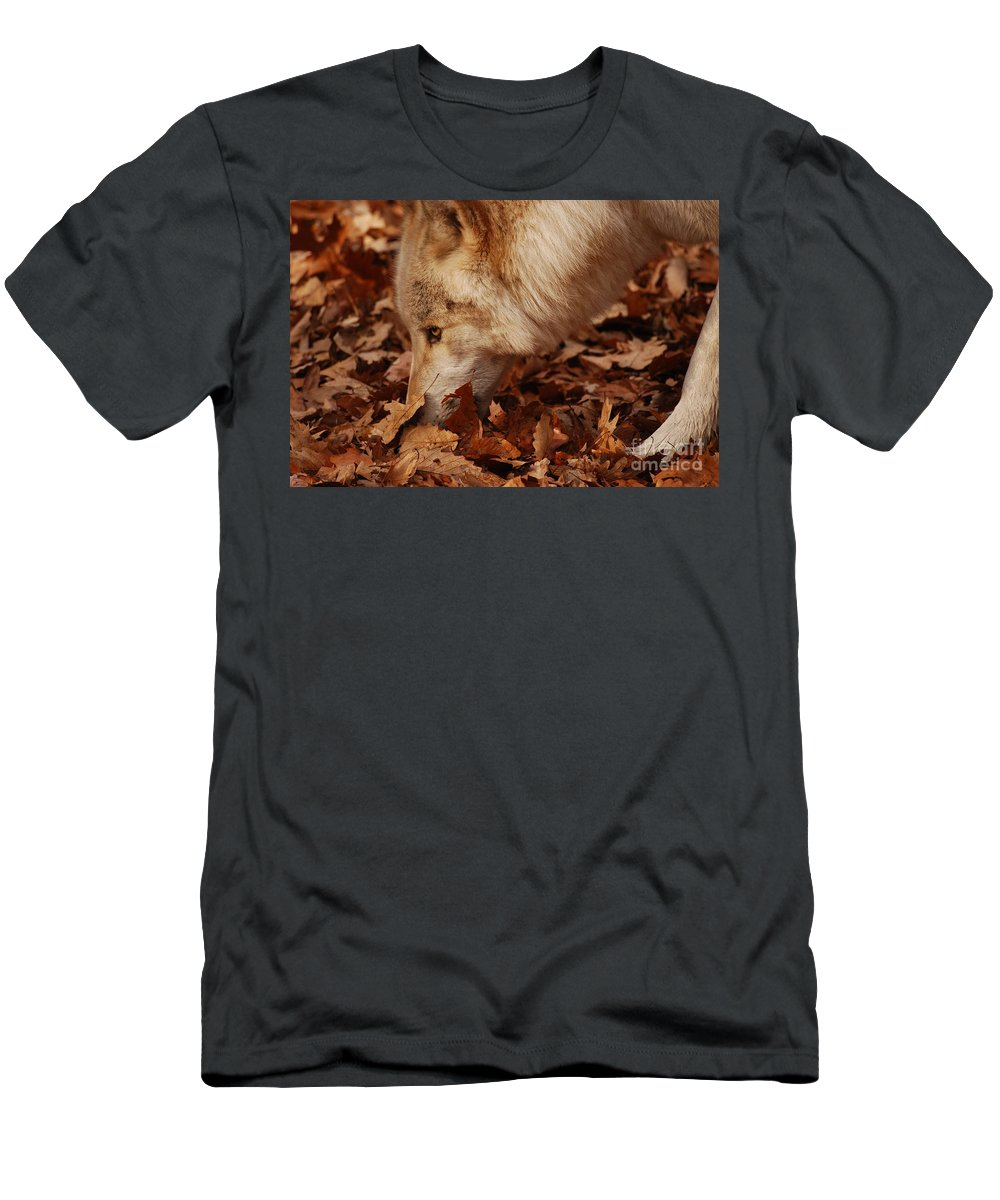 Wolf Men's T-Shirt (Athletic Fit) featuring the photograph Picking Up The Scent by Lori Tambakis