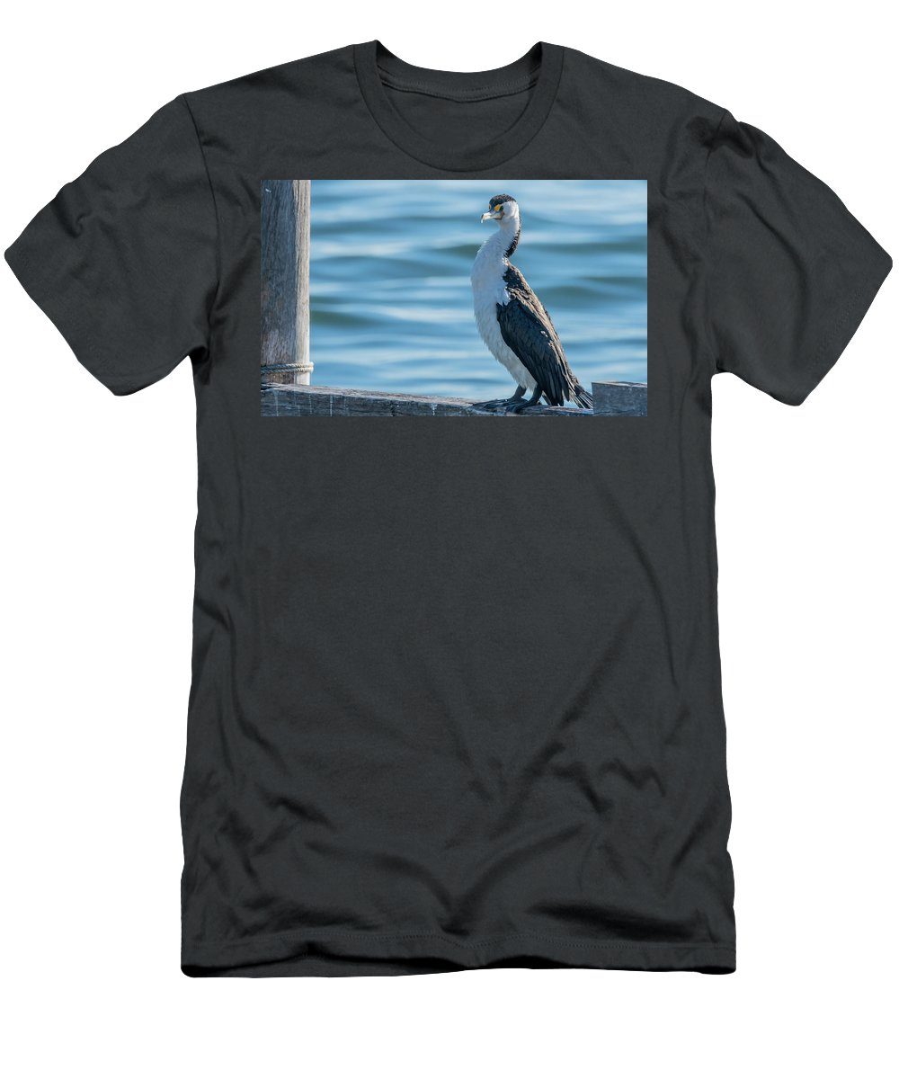 San Remo Men's T-Shirt (Athletic Fit) featuring the photograph Pied Cormorant On Old Wharf by Merrillie Redden