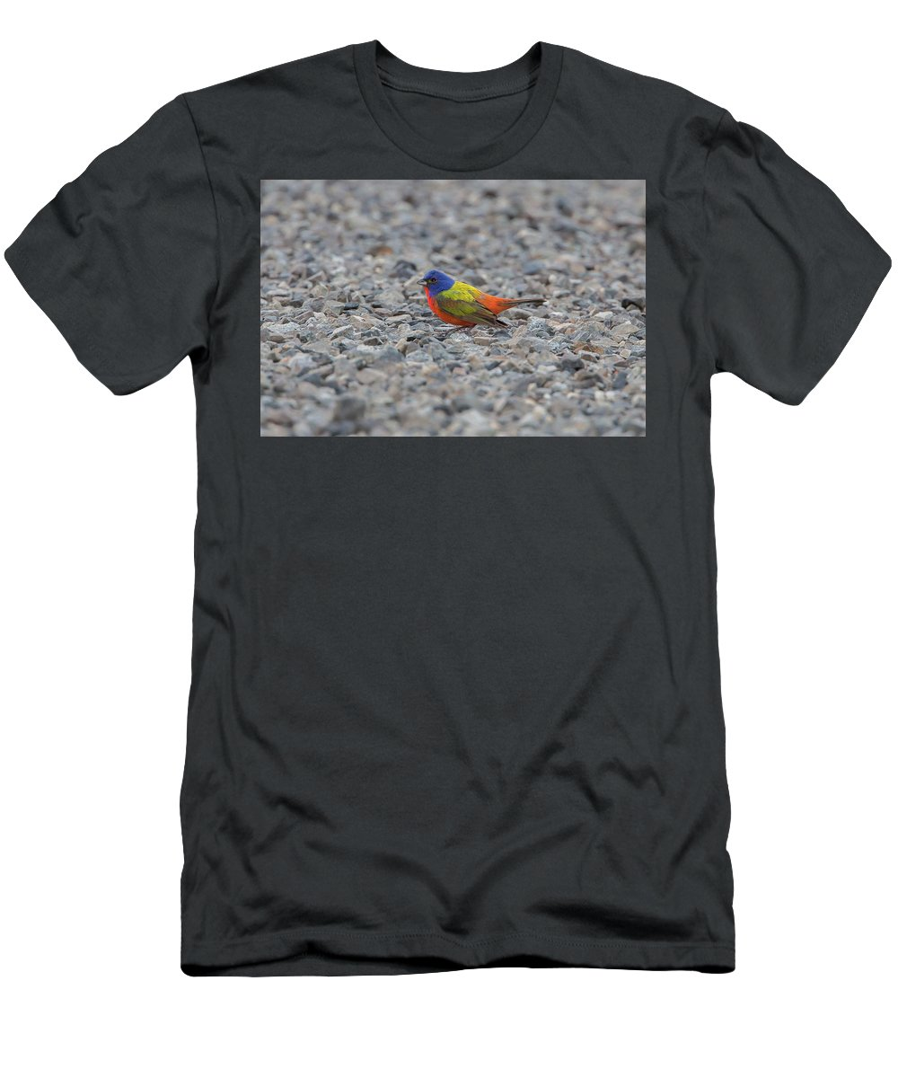 Ronnie Maum Men's T-Shirt (Athletic Fit) featuring the photograph Pin Cushion On The Rocks by Ronnie Maum