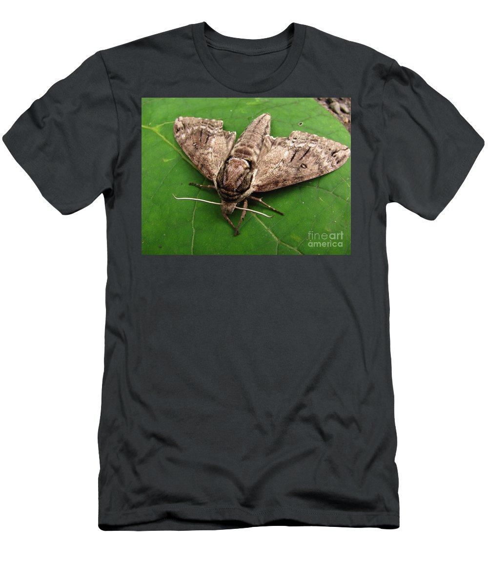 Plebeian Sphinx Moth Images Maryland Moth Prints Old Growth Forest Biodiversity Preservation Wildlife Habitat Conservation Rare Moth Prints Rare Moth Images Nocturnal Creature Images Natures Nightshift Entomology Cool Critter Prints Nature Photography Moth Photography Naturalist Forest Ecology Woodland Wonders Creatures Of The Night Explore Nature Discovery Animal Planet Macro Photography Environmental Science Metamorpheses Natural Design Intelligent Design Lifeform Forest Being Endangered Ecosystem Protection Stop Sprawl Men's T-Shirt (Athletic Fit) featuring the photograph Plebeian Sphinx Moth by Joshua Bales