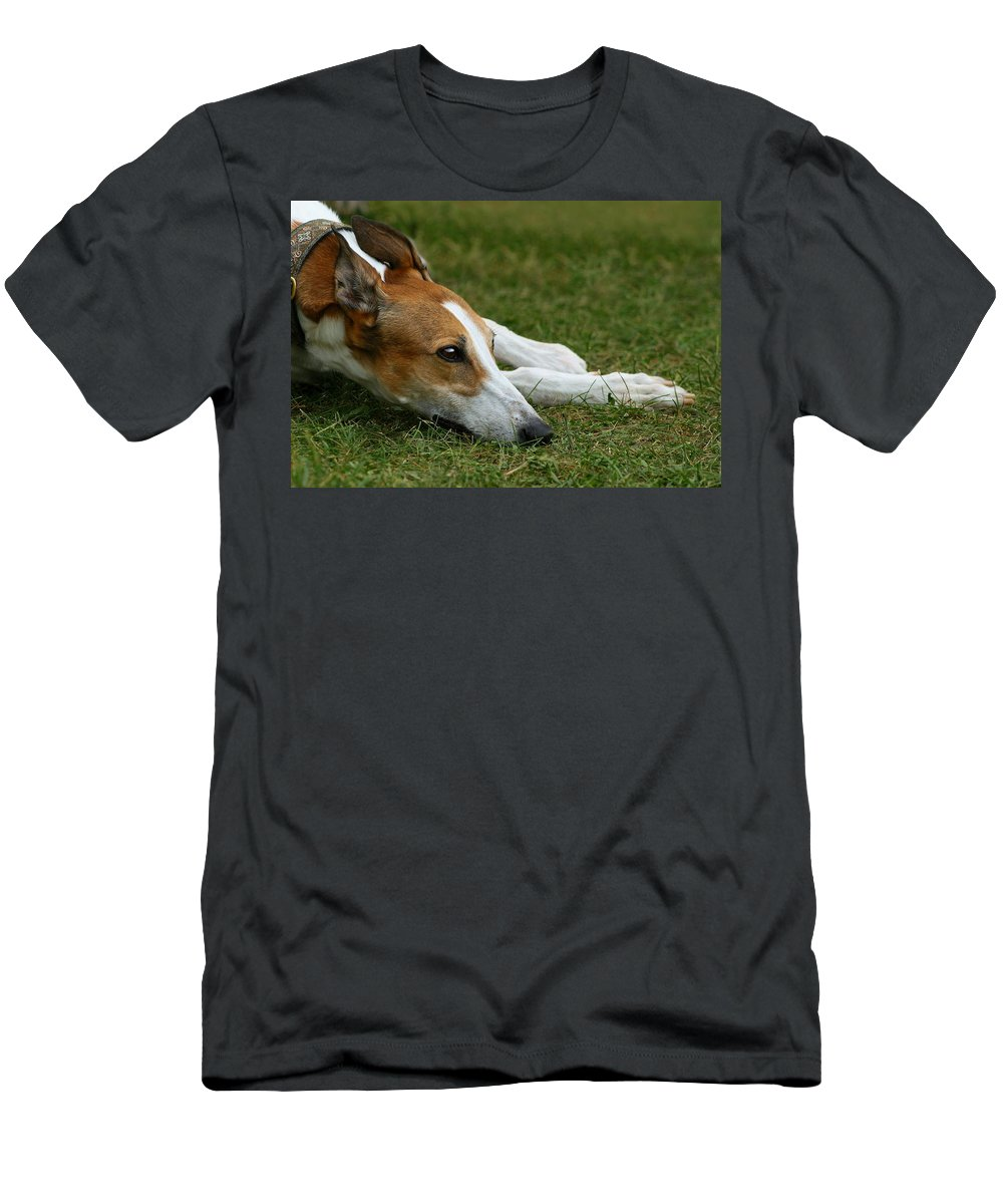 Editorial T-Shirt featuring the photograph Portrait of a Greyhound - Soulful by Angela Rath