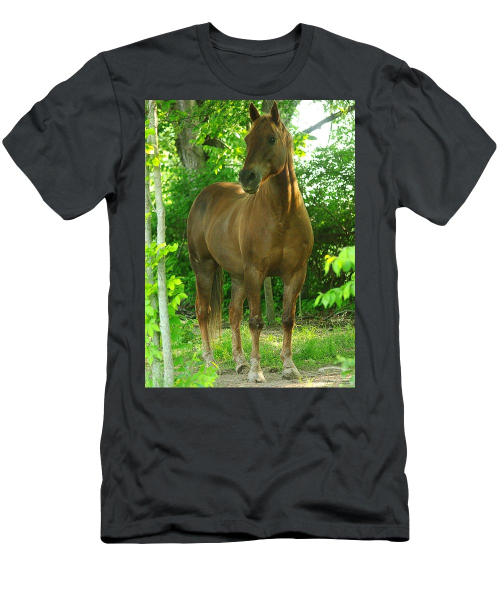 jenny Gandert Horse Chestnut Evening Light Equine Equus Gelding Chestnut Shine Mud Copper Sun Evening Light Trees Shade Cavallo Caballo quarter Horse Pasture Men's T-Shirt (Athletic Fit) featuring the photograph Pretty Boy by Jenny Gandert