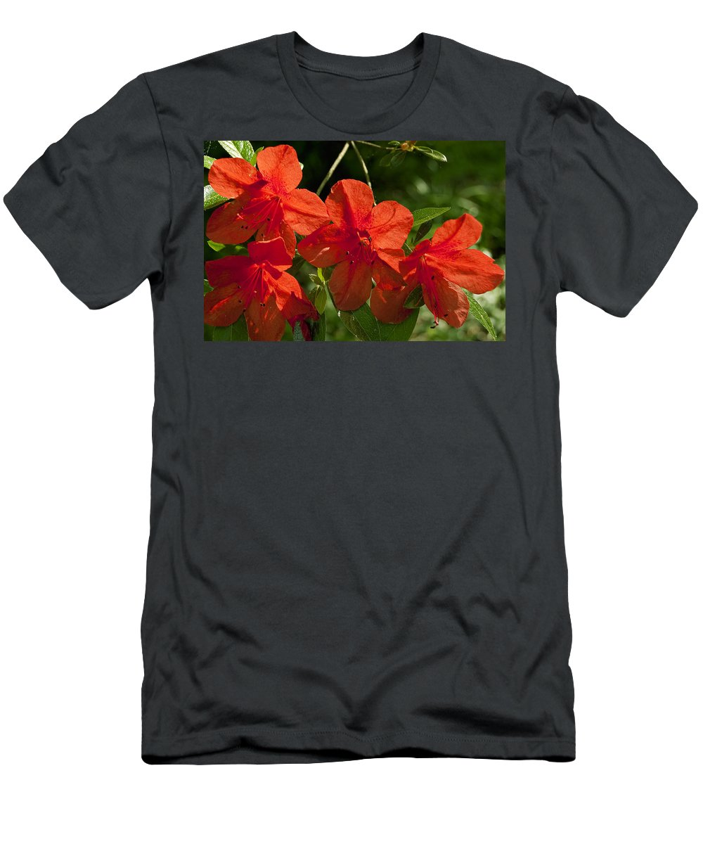 Flowers T-Shirt featuring the photograph Pretty In Red by Gary Adkins