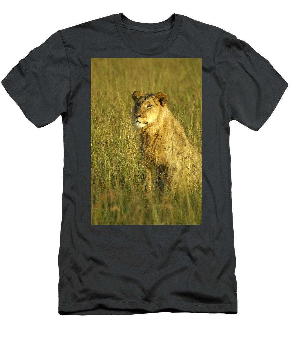 Africa T-Shirt featuring the photograph Princely Lion by Michele Burgess