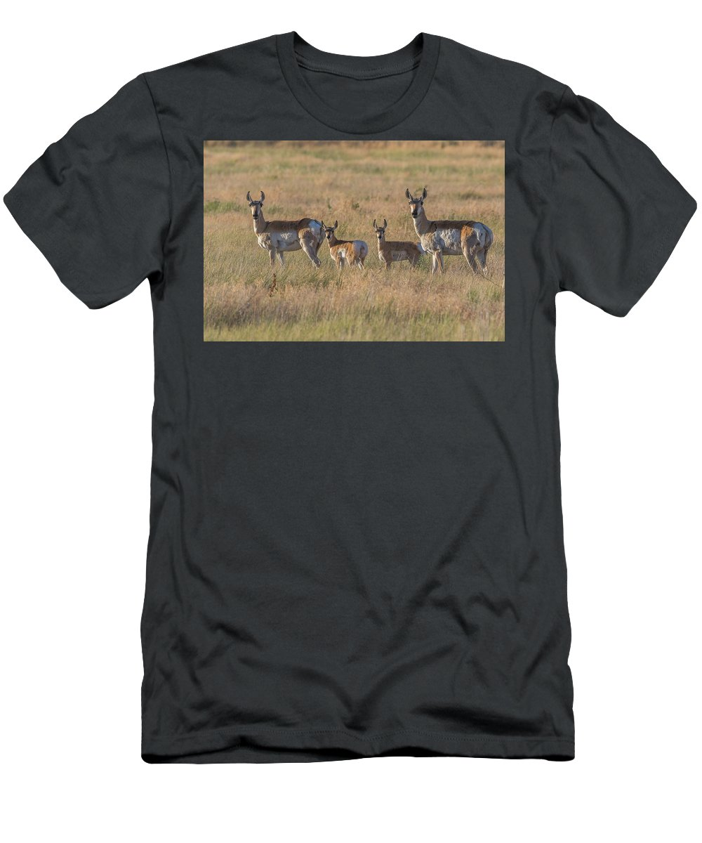 Pronghorn Men's T-Shirt (Athletic Fit) featuring the photograph Pronghorn Fawns And Their Mothers by Tony Hake