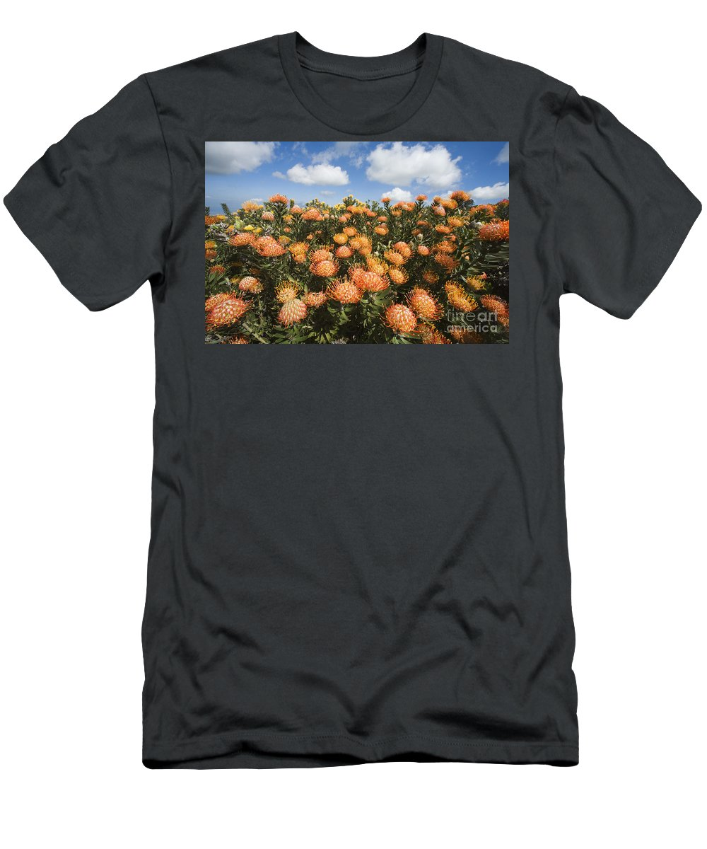 Afternoon Men's T-Shirt (Athletic Fit) featuring the photograph Protea Blossoms by Ron Dahlquist - Printscapes