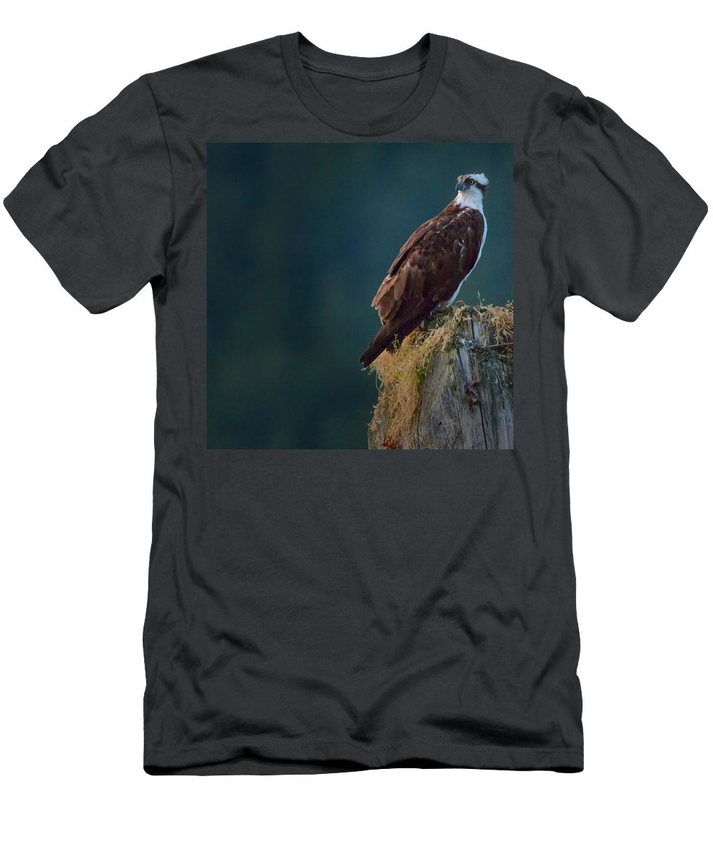 Osprey Men's T-Shirt (Athletic Fit) featuring the photograph Proud Parent by Randy Hall