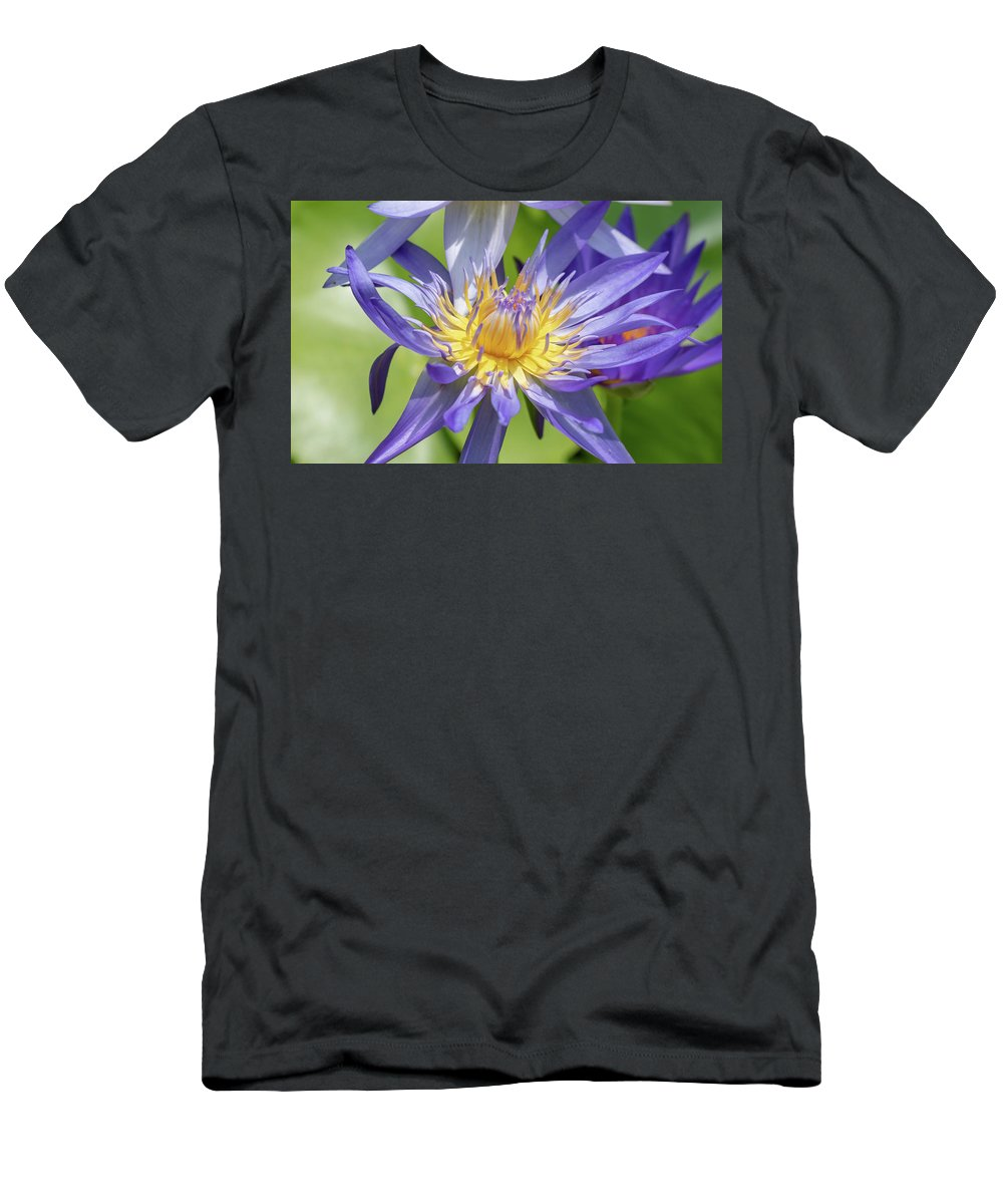 Beauty Men's T-Shirt (Athletic Fit) featuring the photograph Purple Water Lily Flowers Blooming In Pond by Merrillie Redden