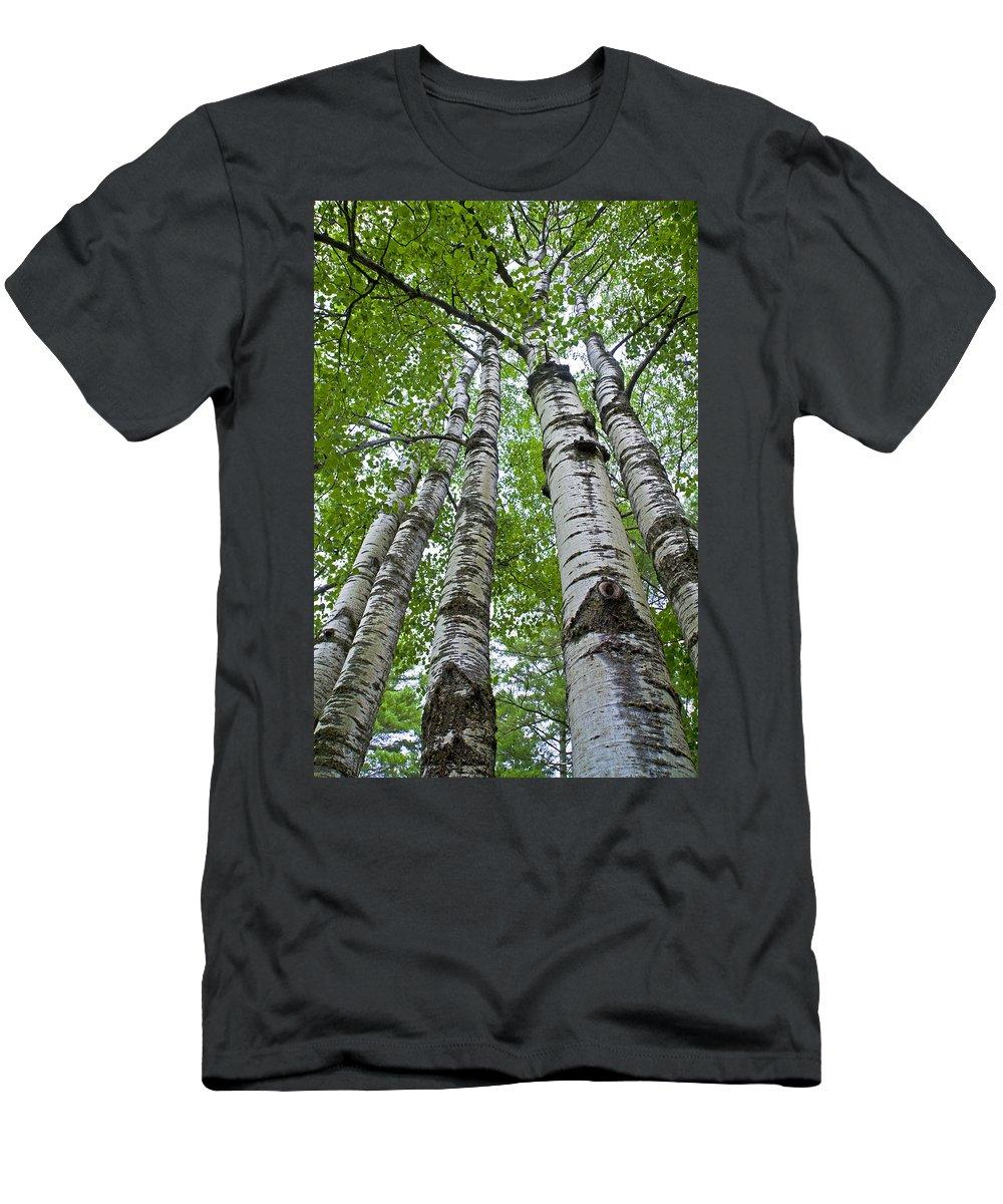 Quaking Aspen Men's T-Shirt (Athletic Fit) featuring the photograph Quaking Aspen by David Freuthal