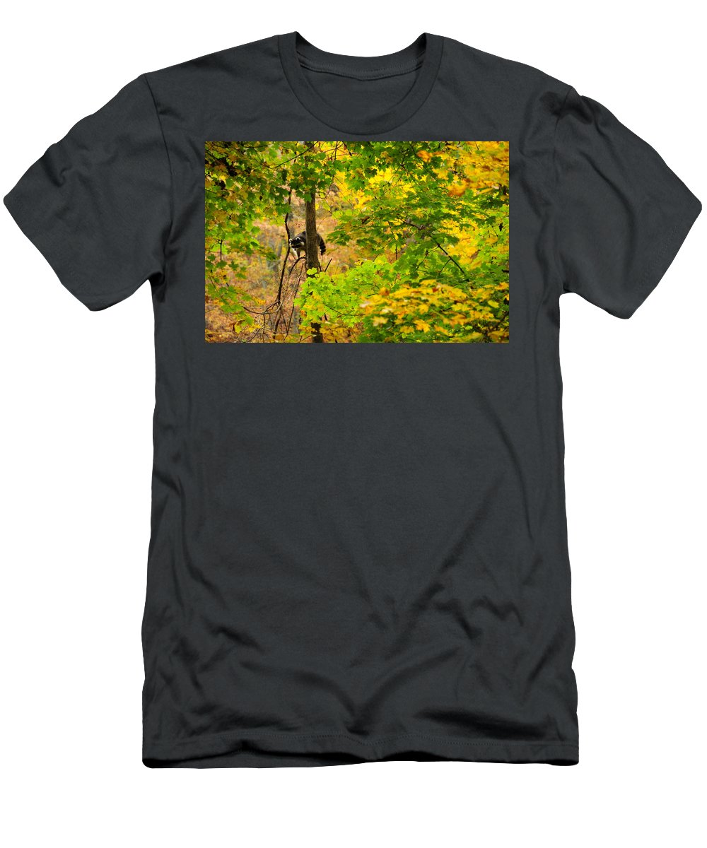 Racoon Men's T-Shirt (Athletic Fit) featuring the photograph Racoon In Fall Trees by David Arment