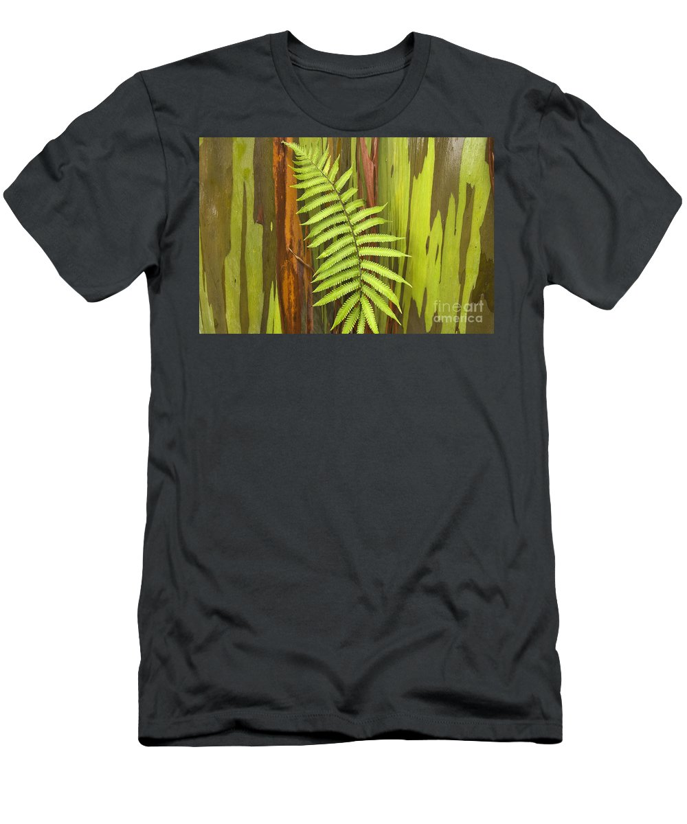 Background Men's T-Shirt (Athletic Fit) featuring the photograph Rainbow Eucalyptus And Fern by Ron Dahlquist - Printscapes