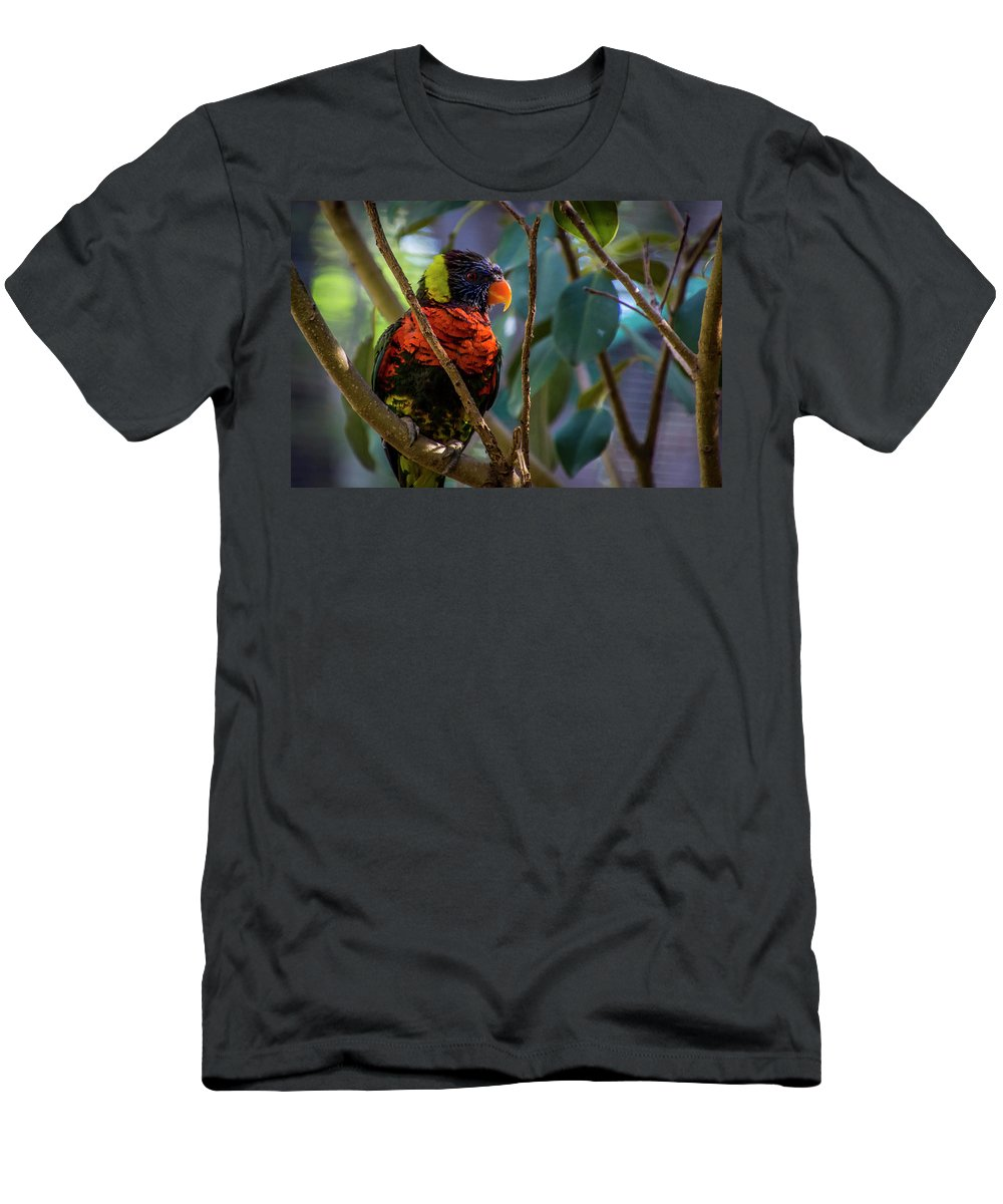 Australian Outback Birds Men's T-Shirt (Athletic Fit) featuring the photograph Rainbow Lorikeet by Donald Pash