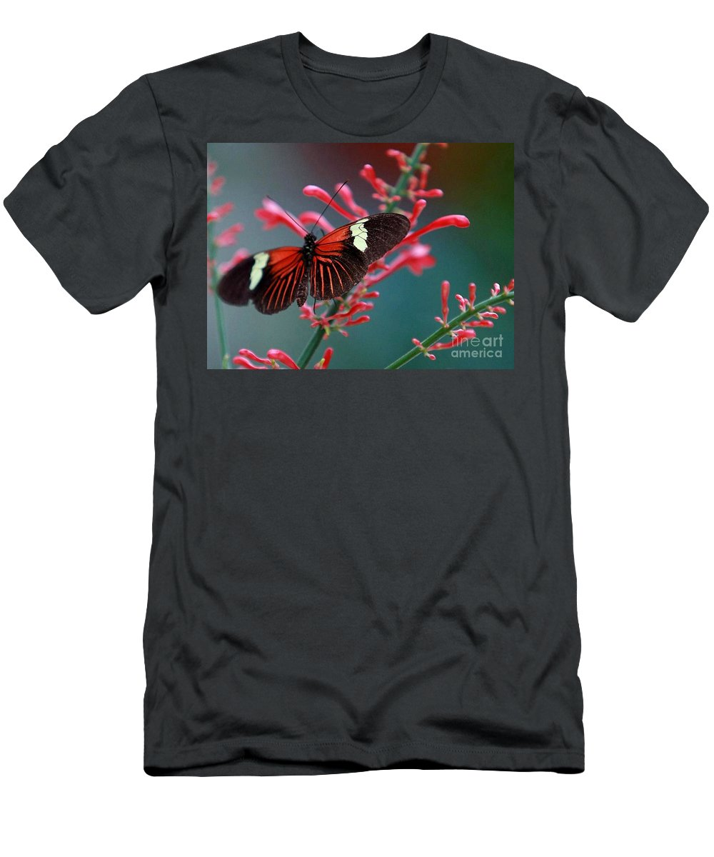 Butterfly Men's T-Shirt (Athletic Fit) featuring the photograph Red Admiral Butterfly by Randy Matthews