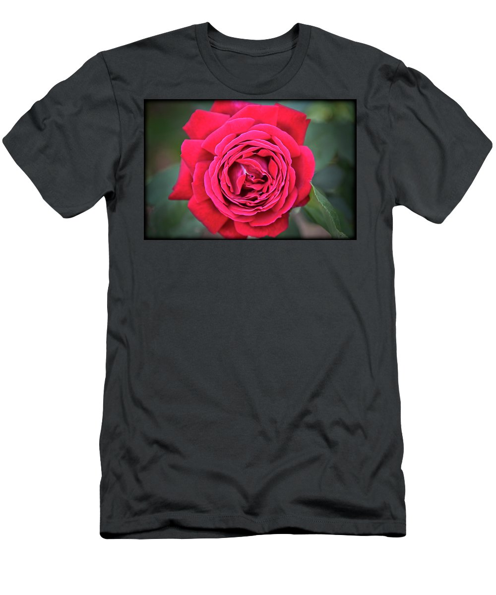 Red Rose Men's T-Shirt (Athletic Fit) featuring the photograph Red As A Rose by Saija Lehtonen